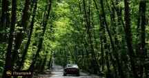 Gissoom Jungle