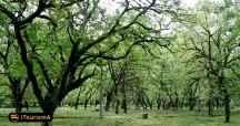 Dohezar Forest