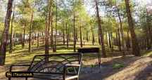 Lavizan Forest Park
