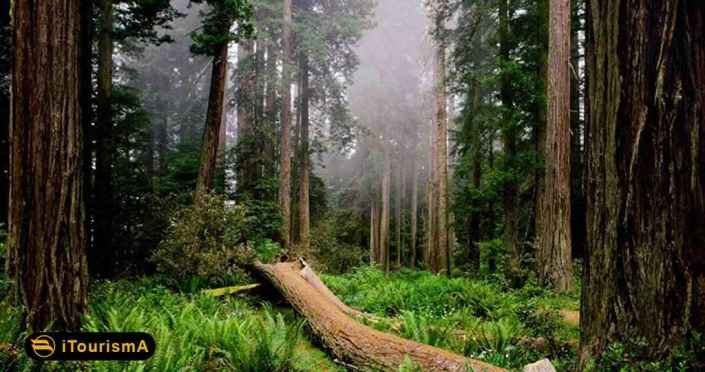 Dalkhani Jungle