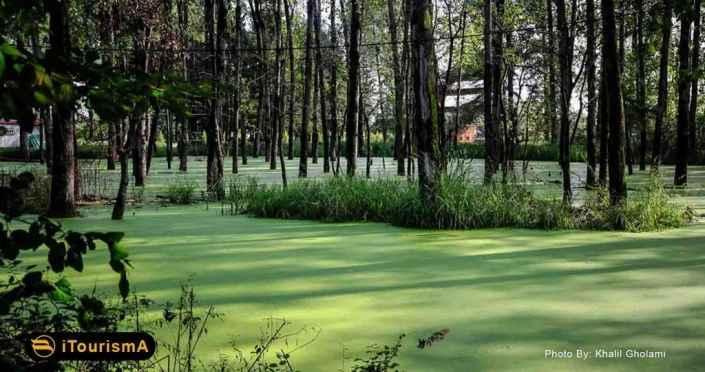 Saravan Swamp