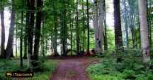 Lavij Forest