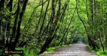 Nur Forest Park