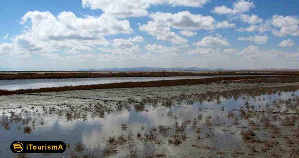 تالاب بامدژ یکی از زیستگاه های مهم و غنی آبی حیات وحش
